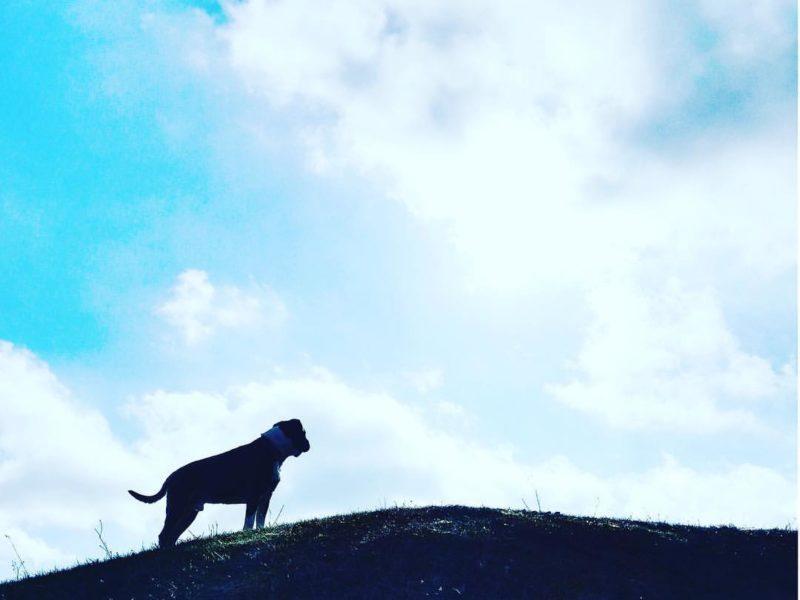 Projet 16 – Dog & Sky